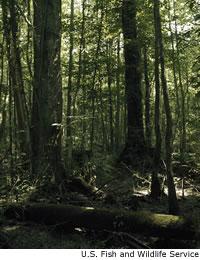 River Swamps