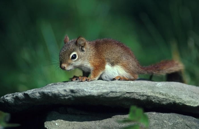 Keeping a Squirrel as Pet