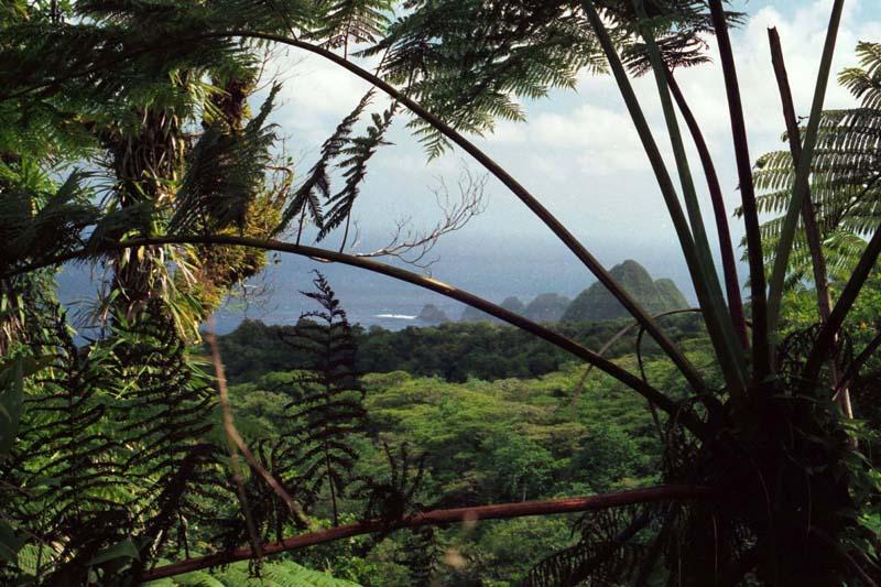 Rainforests - NatureWorks