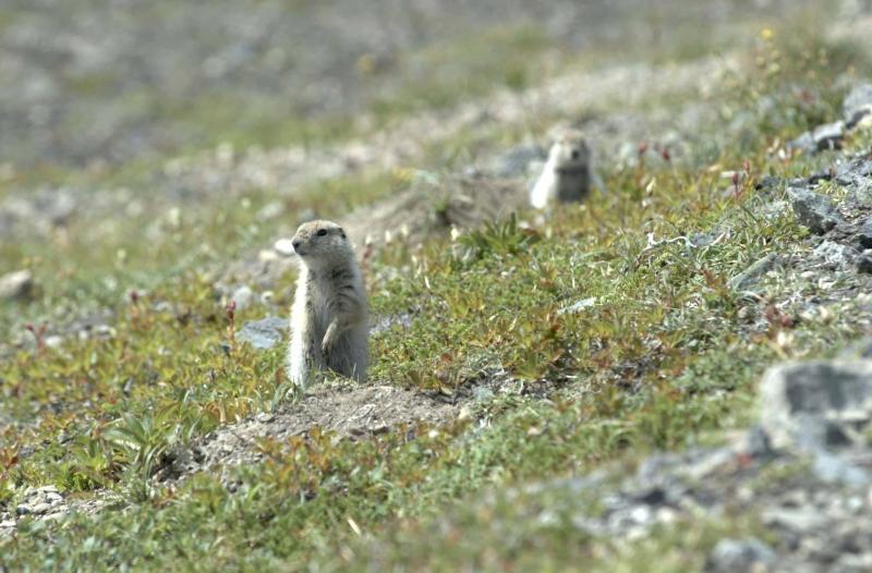 tundra wildlife journal junior