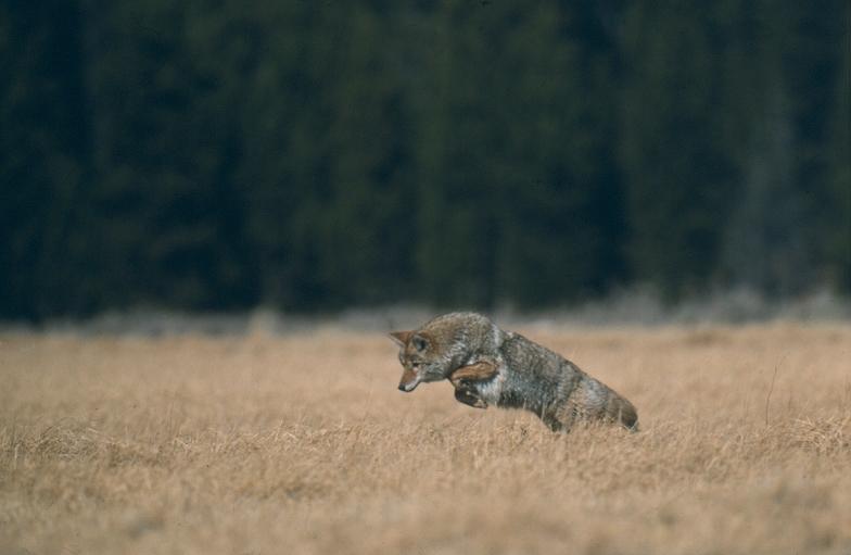Carnivores Natureworks