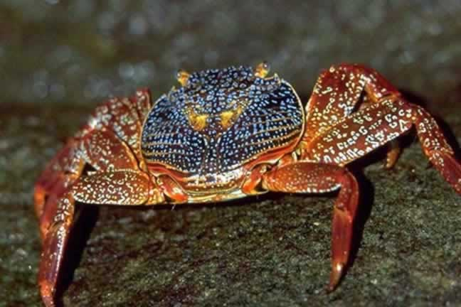 Crustacea - The Crustaceans Wildlife Journal Junior
