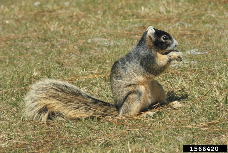 What Kind Of Food Do Squirrels Eat