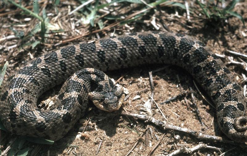 N H Reptiles New Hampshire Reptiles...