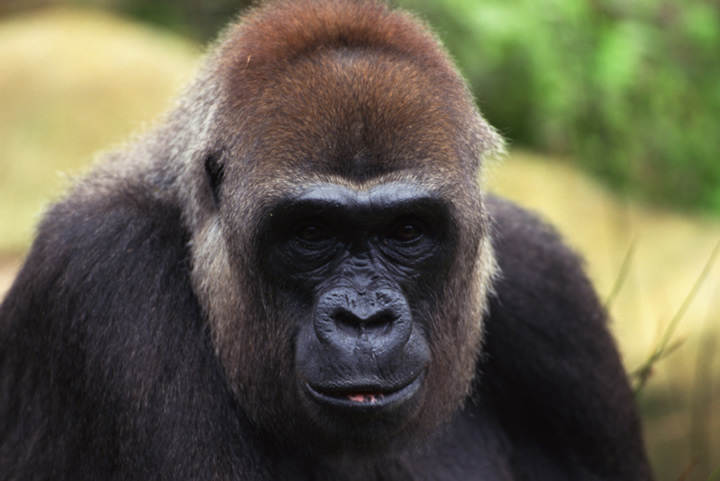 Wildlife Documentaries Wildlife Documentaries