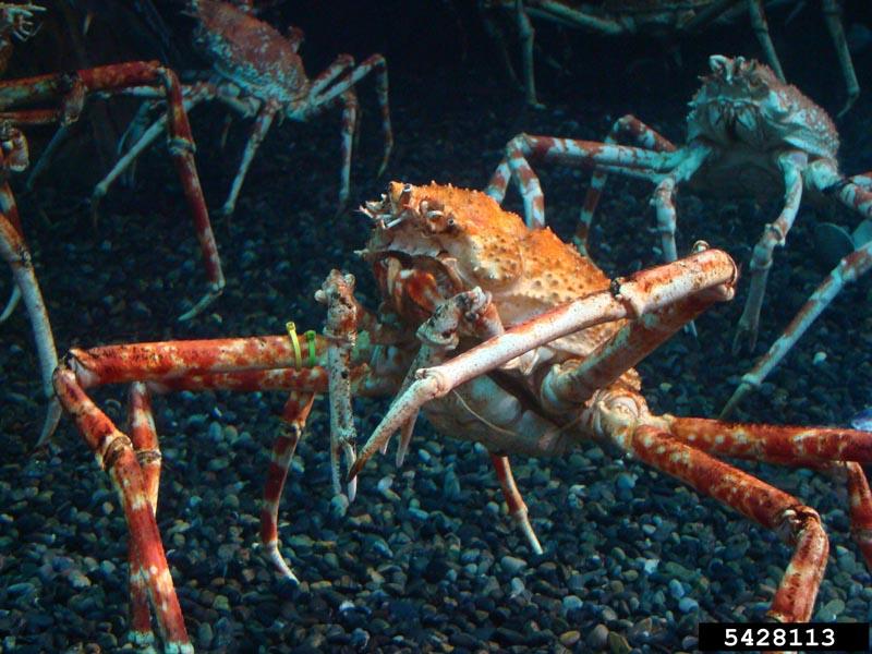 arthropoda crustaceans insects wildlife journal junior
