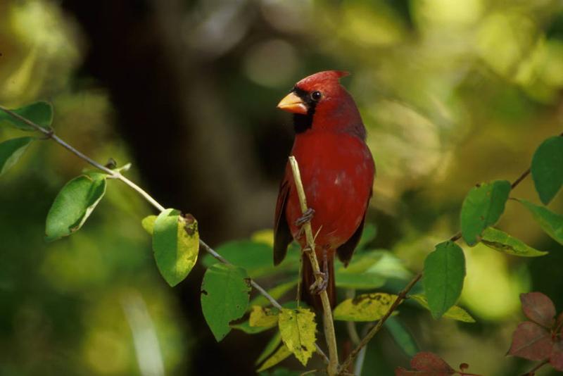 Temperate Deciduous Forests - NatureWorks