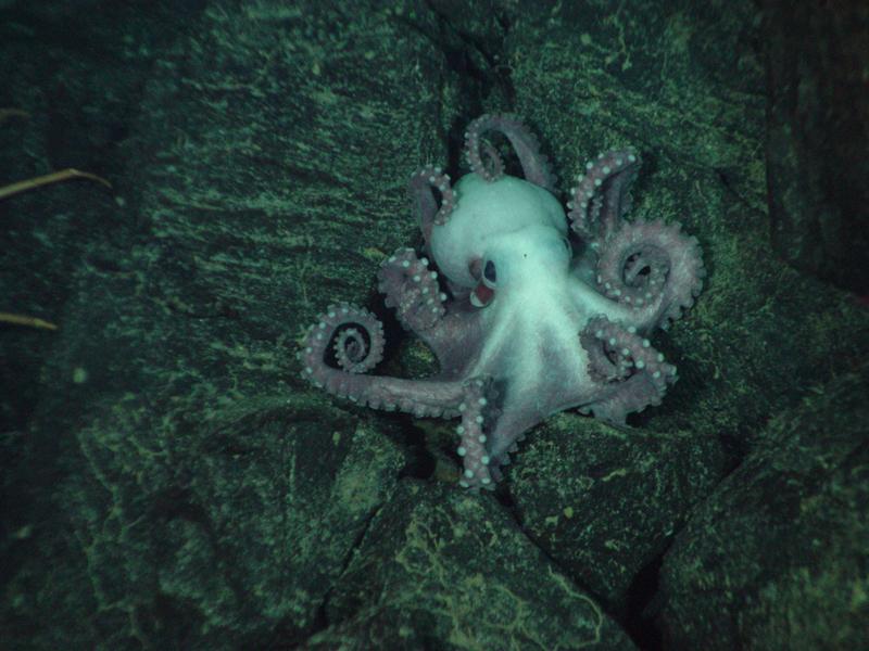 Ocean zones natureworks animals sciox Images