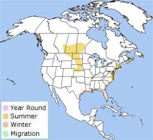 Piping Plover Charadrius Melodus NatureWorks - Map of great plains in canada and the us
