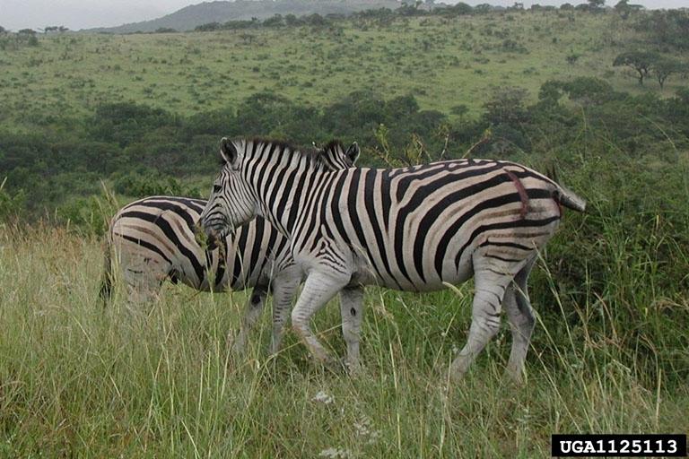 african grassland animals wwwpixsharkcom images