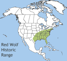 Red Wolf Canis Rufus NatureWorks - Maps of the location of wolves in the us