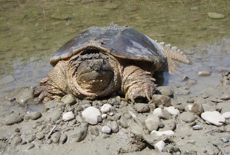 New Hampshire Reptiles Wildlife Journal Junior