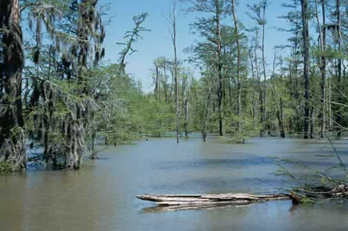 Professional Development - Estuarine Biology: NOAA's ...  Estuary Plants