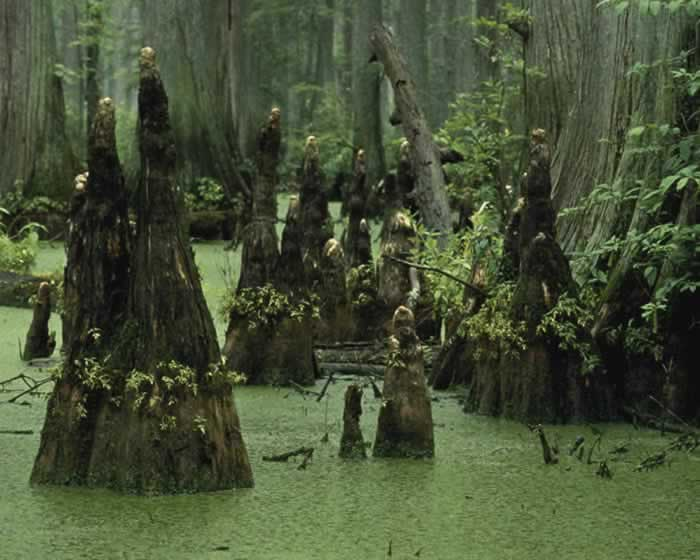 [11F] - X - Wonsan Province Swamp2