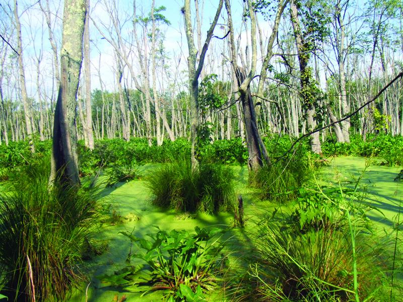 Swamps - NatureWorks