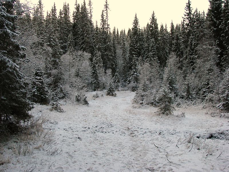 Main Features Of This Vegetation Are Evergreen Species In Taiga Spruce