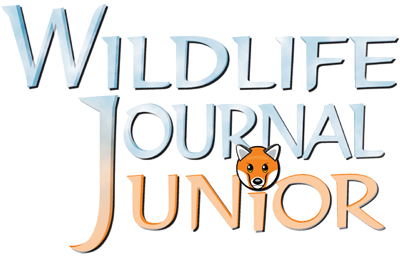 Wildlife Journal Junior!